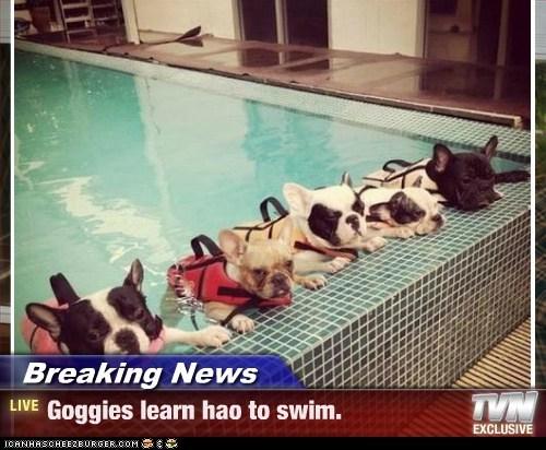 Breaking News - Goggies learn hao to swim.