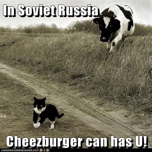 I Can Has Cheezburger,in soviet russia,chasing,Cats,cows