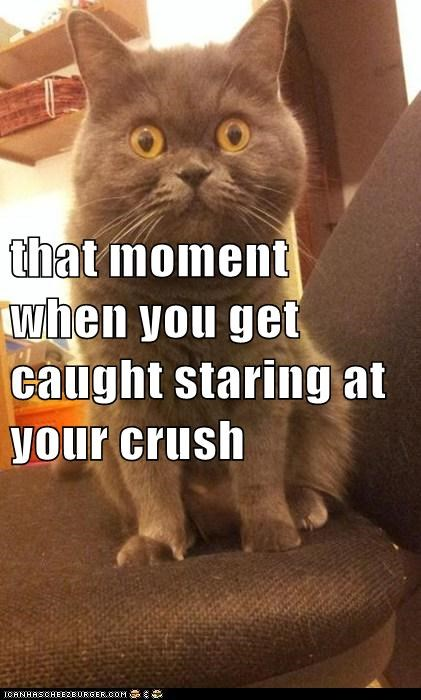 Awkward,Cats,crush