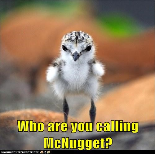 mcnuggets birds angry insult - 7089424384