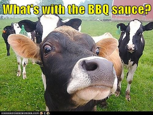 barbecue sauce suspicious eating cows - 7089451264