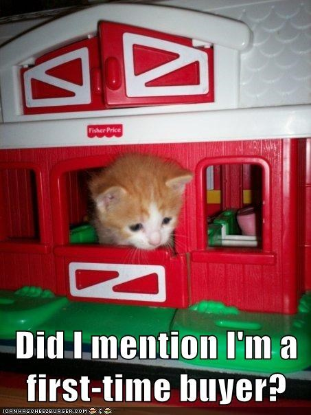 kitten toys house Cats - 7089477376