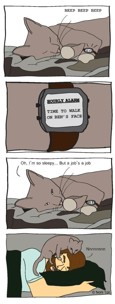cute comic Cats - 7090571264