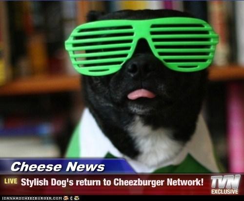 Cheezburger Image 7090642176