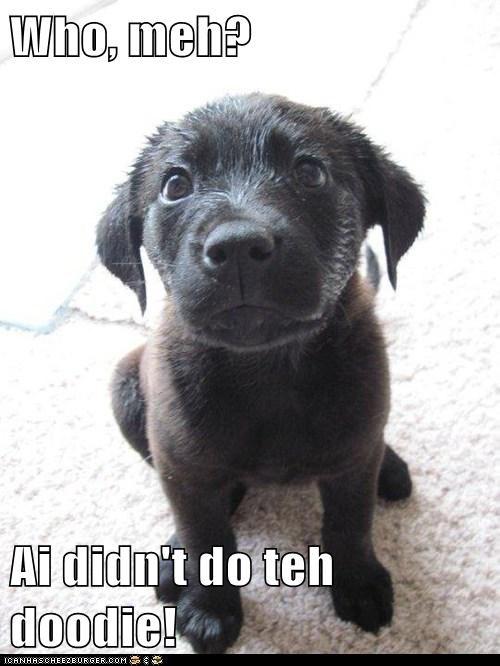 Who, meh?  Ai didn't do teh doodie!