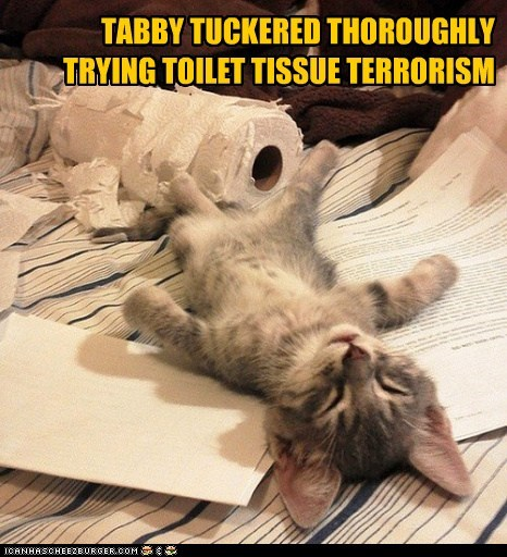 TABBY TUCKERED THOROUGHLY TRYING TOILET TISSUE TERRORISM