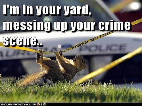 crime scene,climbing,messing up,squirrels,im in ur