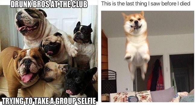 dogs dog memes funny memes Memes doggo doggo memes pupper - 7092741