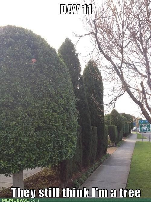 trees they still don't know IRL hedges - 7092779776