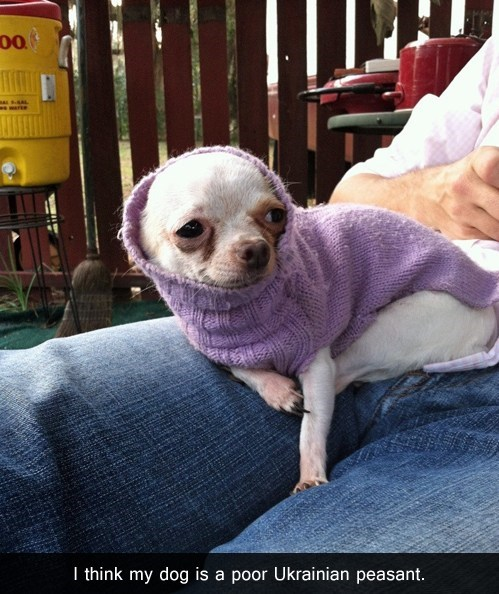 dogs peasant sweater chihuahua - 7093223168