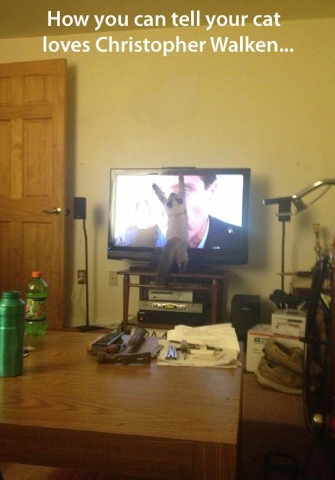 TV christopher walken love Cats