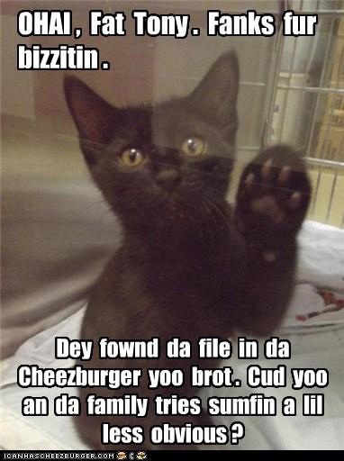 Cheezburger Image 7093349120