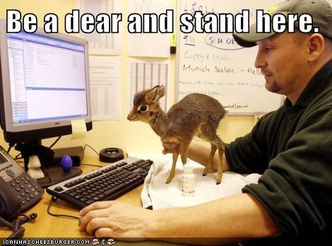 dik dik,stand,computers,puns,deer