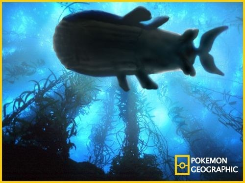 national geographic,wailord