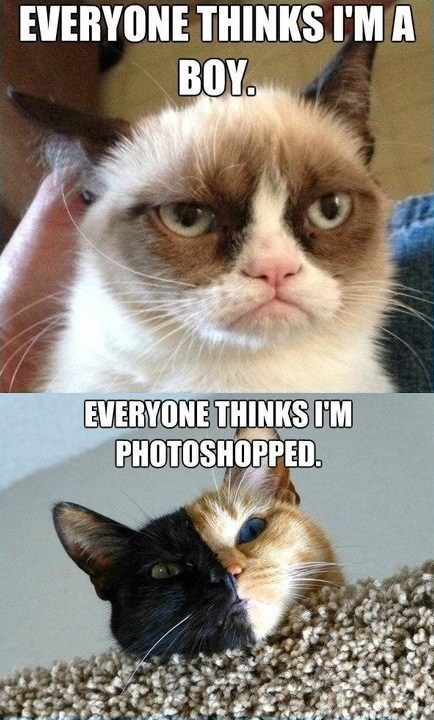 lolcats First World Problems Grumpy Cat Cats - 7093714432