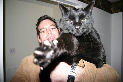 cat picture - 7094108160