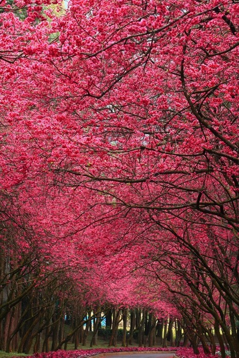 trees trail park flowers pretty colors blooming destination WIN! g rated