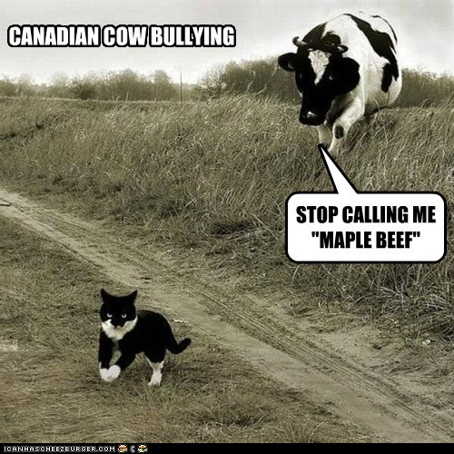 "CANADIAN COW BULLYING STOP CALLING ME ""MAPLE BEEF"""
