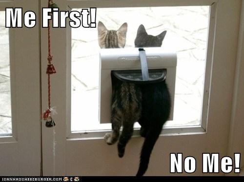 stuck outside Cats - 7094401280