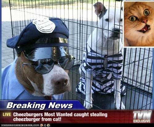 Cheezburger Image 7094412800
