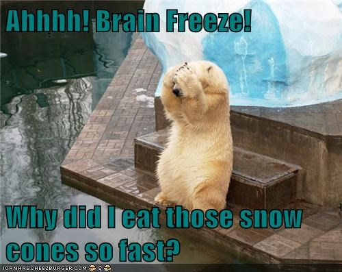 polar bears,brain freeze,snow cones