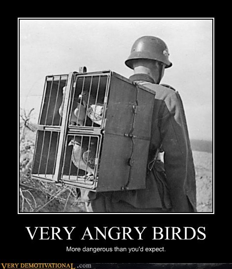 VERY ANGRY BIRDS More dangerous than you'd expect.