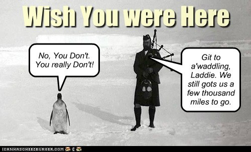 snow bagpipes scotsman penguin - 7095578112