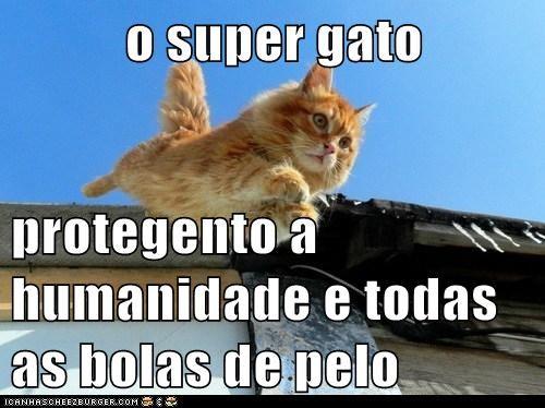o super gato   protegento a humanidade e todas as bolas de pelo