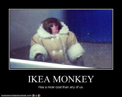 IKEA MONKEY Has a nicer coat than any of us.