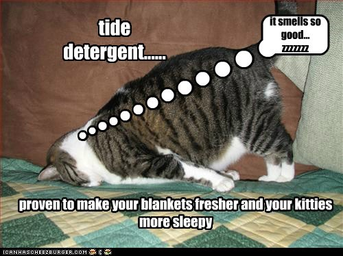 tide detergent...... proven to make your blankets fresher and your kitties more sleepy it smells so good... zzzzzzz
