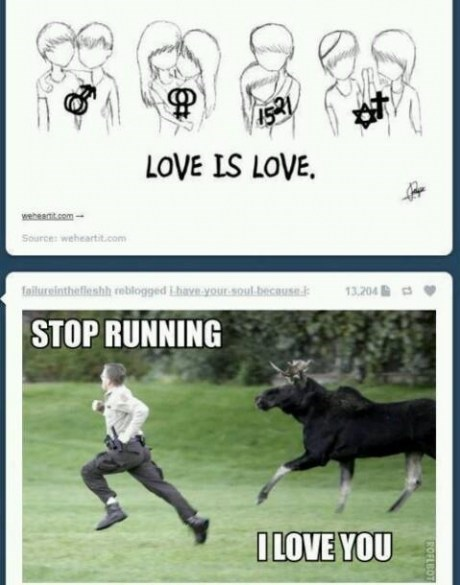 love you,cow,running away