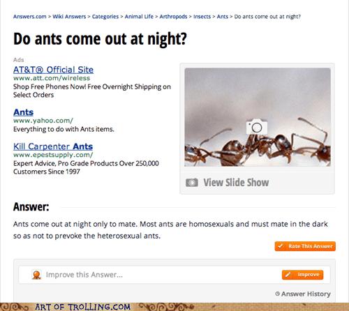 ants,gay