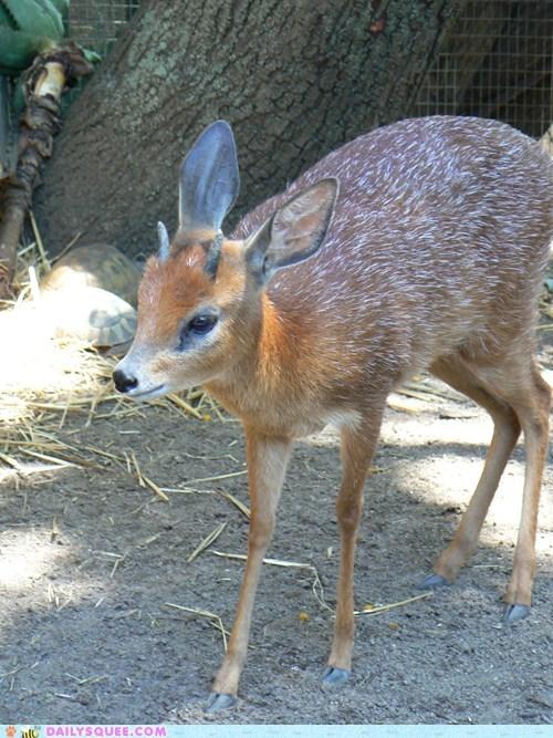 whatsit antlers deer ungulate squee - 7097772288