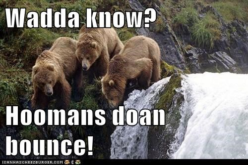 bears,humans,bounce,cliff,fell