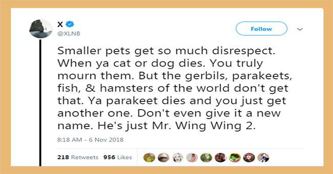 Small Pets get disrespected