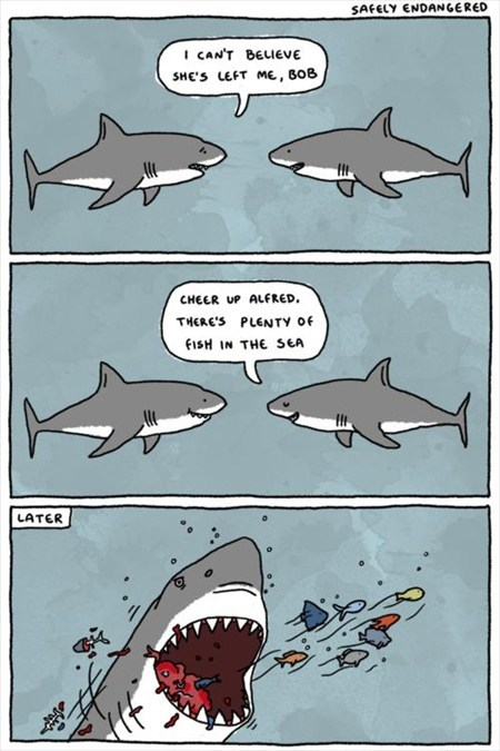 relationships sharks comic fish