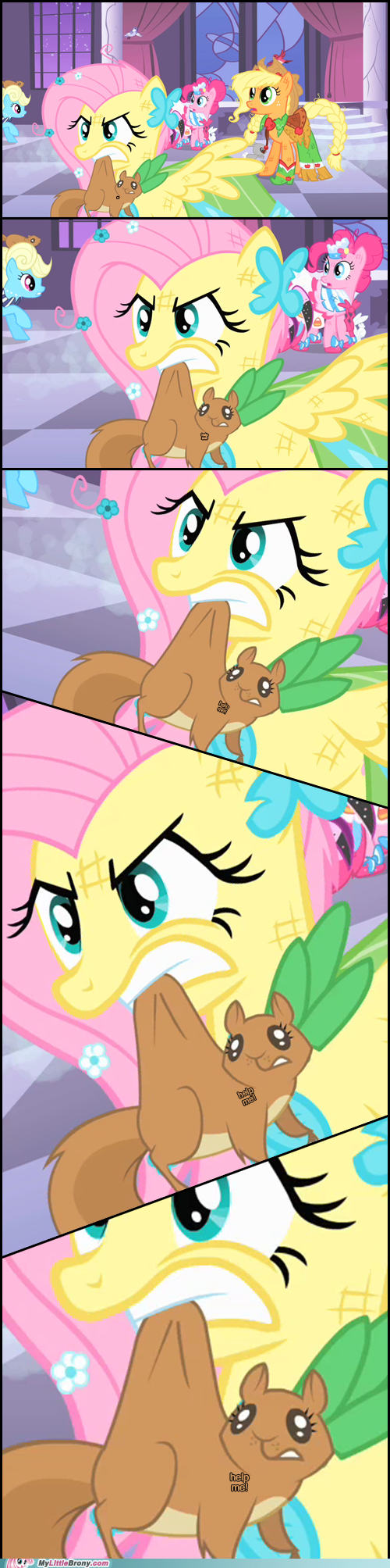 squirrel fluttershy animals - 7099423232