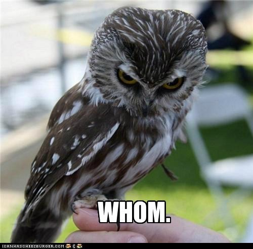annoyed,hoot,grammar,owls,whom