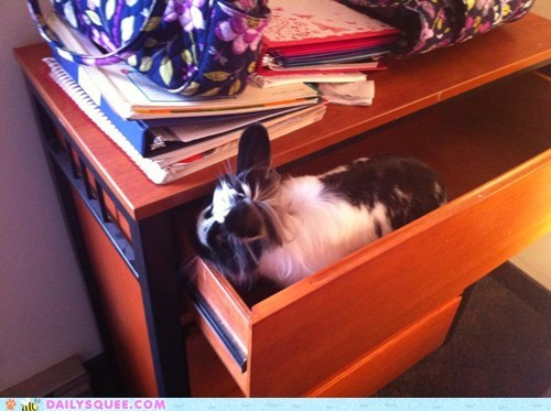 Bunday bunnies reader squee pets squee rabbits - 7099941632