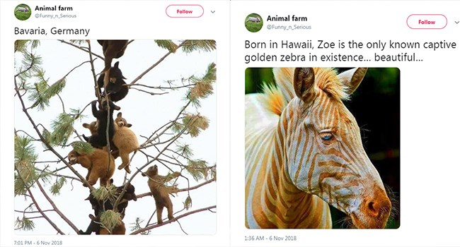 beautiful tweets of animals from animalfarms