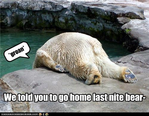 go home your drunk,bears,polar bears,hangover,told you