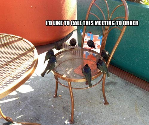 chair birds meeting - 7101058304