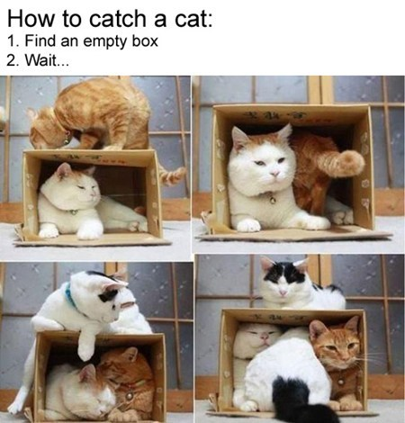 box,Cats