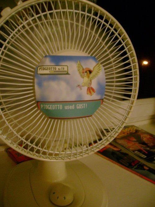 IRL gust pidgeotto fans - 7101634816