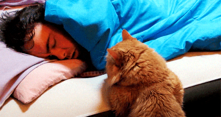 cat gifs wake up alarm clock morning funny cats Cats - 7101701