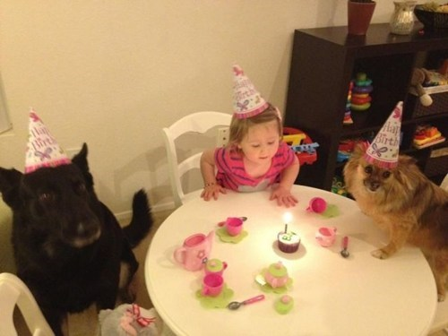 dogs birthdays Party Cats - 7101763584