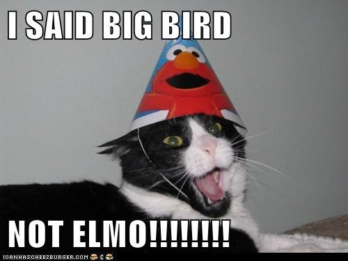 I SAID BIG BIRD  NOT ELMO!!!!!!!!