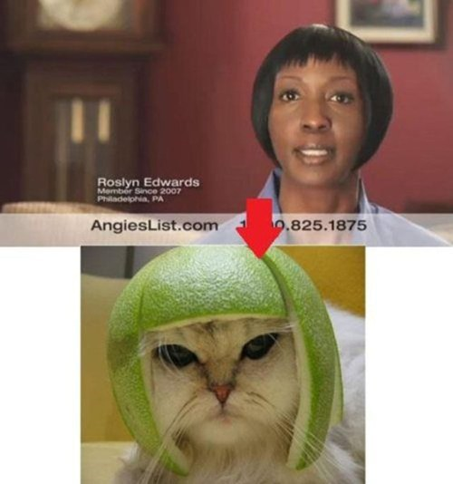cat who wore it better hairdos melons - 7101853952