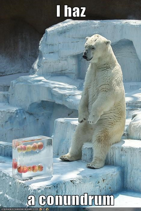 polar bear,ice,apples,conundrum