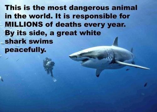 violence activism sharks - 7102049792